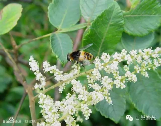 蜂蜜加绿茶变黑 花蜜和蜂蜜哪个好 蜂蜜相克 家家蜜森林蜂蜜 蜂蜜标签图片大全