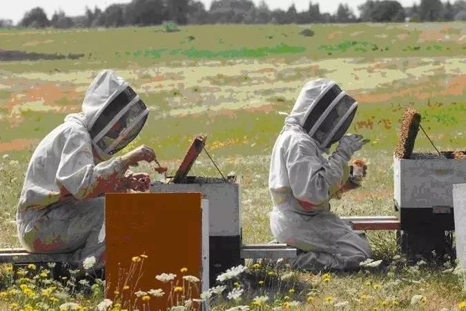 夏天养蜂注意事项