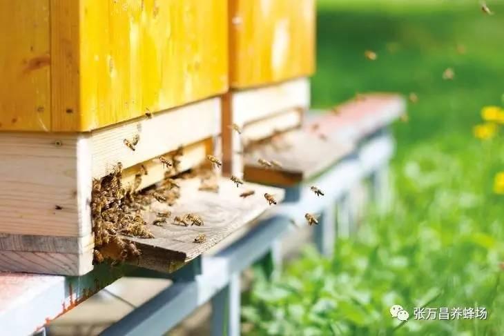 便秘什么时候喝蜂蜜好 花生红枣蜂蜜水止咳吗 成都蜂蜜收购 汪氏蜂蜜怎么样 中国蜂蜜冒充日本货