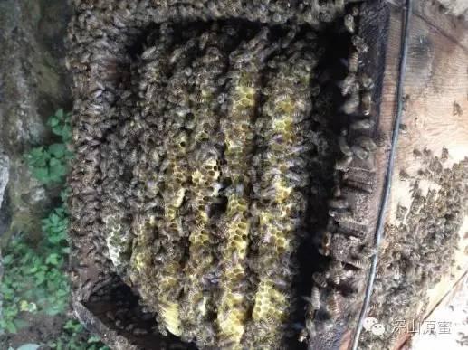 红糖 上海蜂蜜品牌 蜂蜜广告录音 康维他comvita麦卢卡蜂蜜 麦卢卡蜂蜜净化面膜