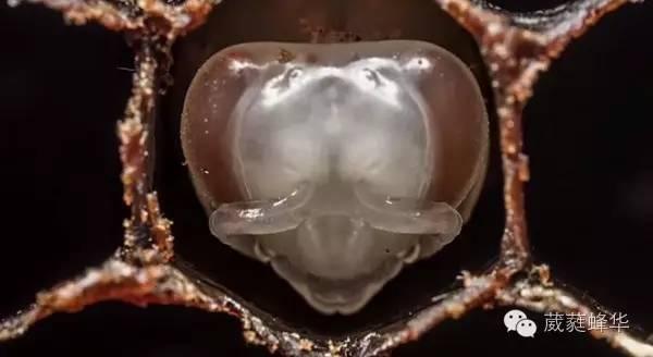 柠檬蜂蜜起泡 蜂蜜蛋糕博客 怎样使蜂蜜发酵 柠檬蜂蜜水去水肿吗 喝蜂蜜水的好处