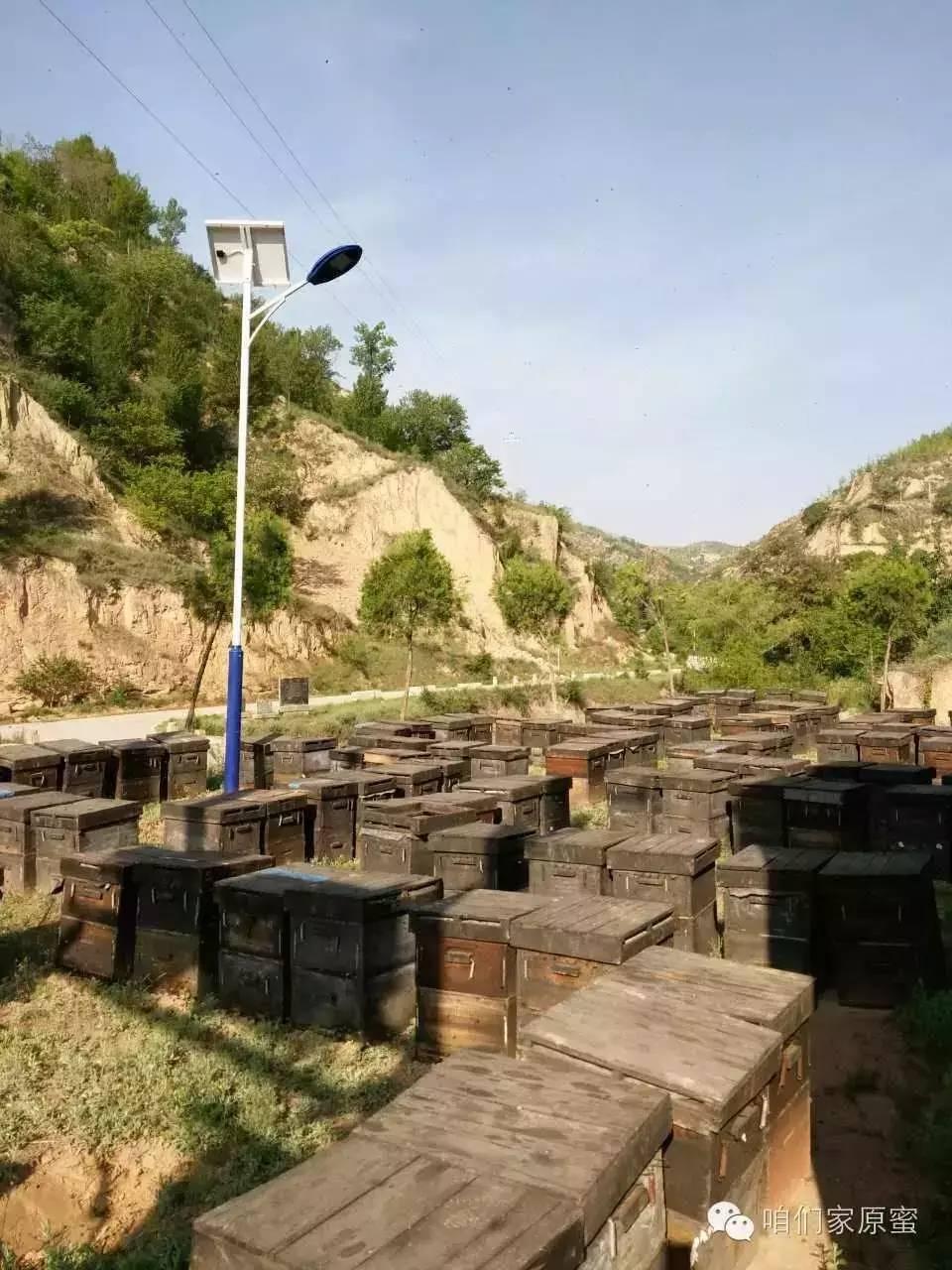 转移战场——清涧  枣花源