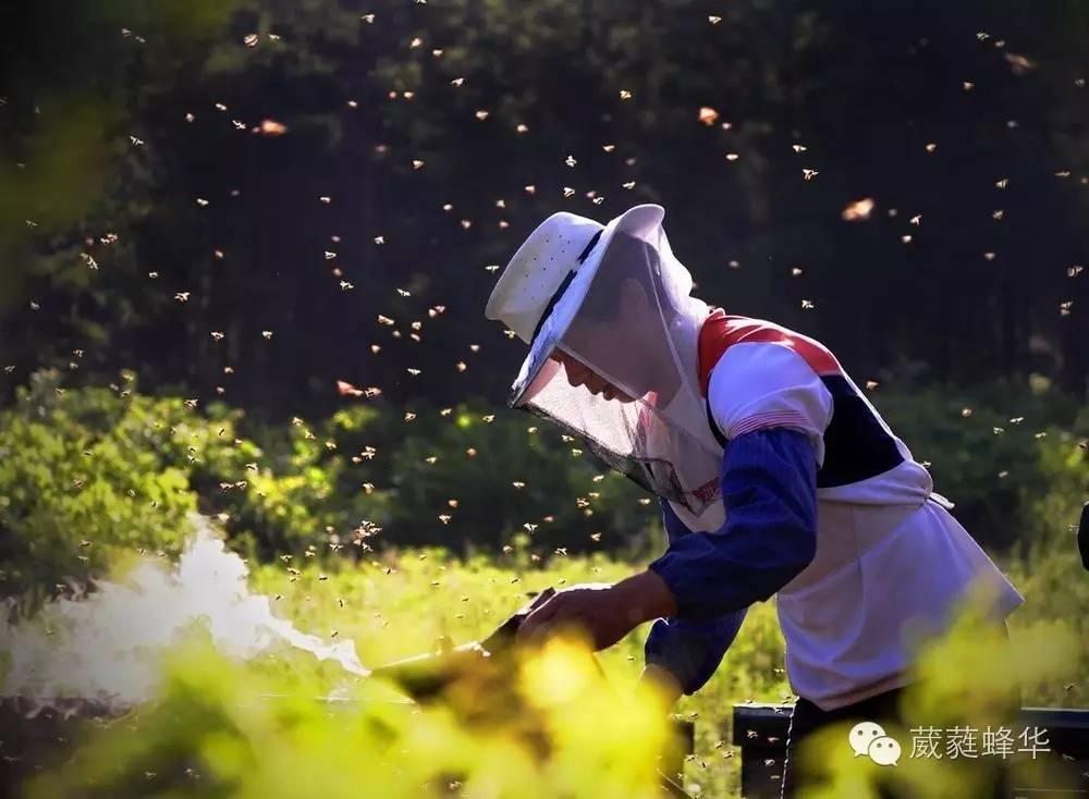 新疆蜂蜜 孕妇可以吃黄芪蜂蜜吗 荔枝蜂蜜图片 韩国蜂蜜皂 早晨起来喝蜂蜜水好吗