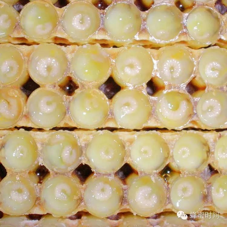 软黄金——蜂王浆的七大作用!