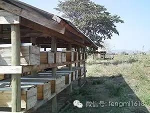 蜂蜜颜色 陈醋与蜂蜜的喝法 椴树蜂蜜真假 沃尔玛惠宜蜂蜜 白萝卜蜂蜜汁