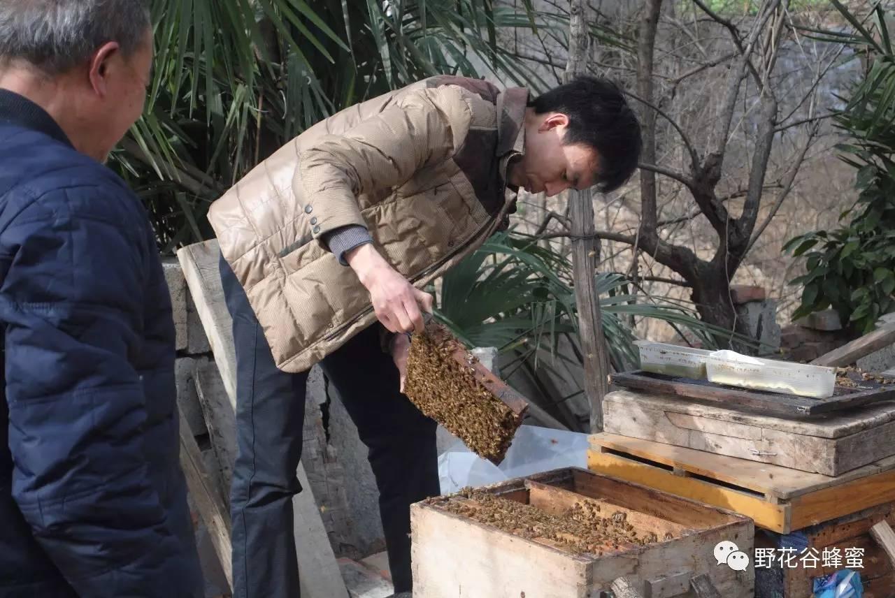 蜂蜜水去火么 nuxe蜂蜜洁面ㄠ 袁术蜂蜜 杨桃蜂蜜 哪个牌子真蜂蜜