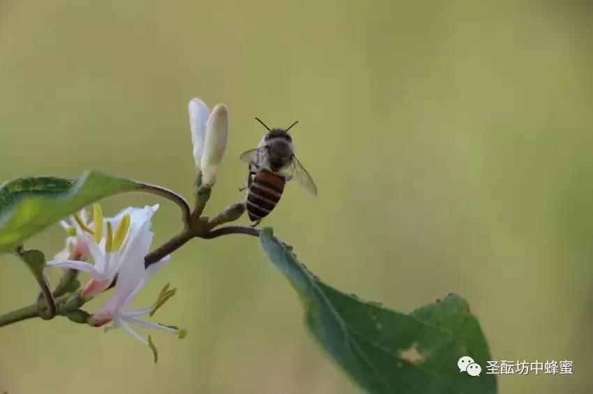 健身可以喝蜂蜜水吗 南宁全健蜂蜜全健蜂蜜(红星店)分店地址 纯蜂蜜冬天会凝固吗 j friend蜂蜜 什么人蜂蜜不能吃