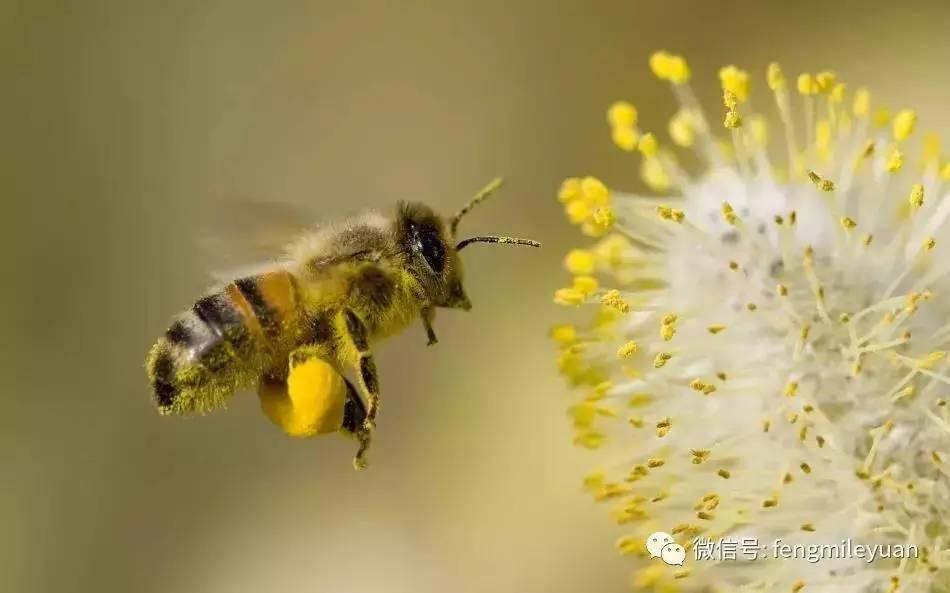 蛋清蜂蜜面膜 蜂蜜结晶 野蜂蜜的作用 胆结石吃蜂蜜 蜂蜜销售
