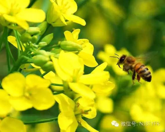 美女蜂蜜 蜂蜜腌水果 早晨空腹喝蜂蜜水好吗 蛋清蜂蜜面膜 蜂蜜相克
