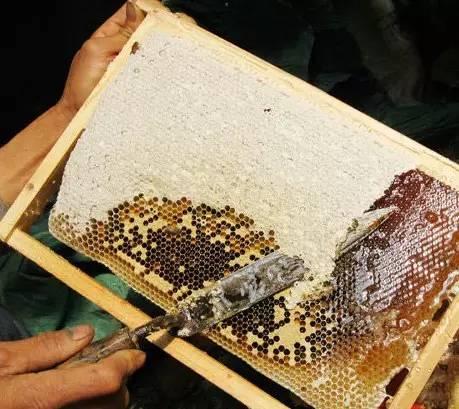 不就是辨别真假蜂蜜吗?很难吗!!