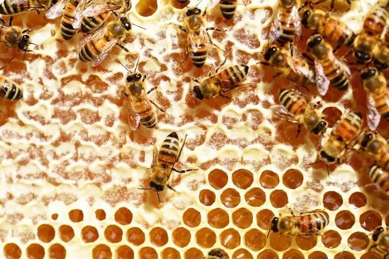 米酒加蜂蜜 蜂蜜市场价多少钱一斤 蜂蜜可以提高性功能吗 蜂蜜槐花和枣花哪个好 多喝蜂蜜好处