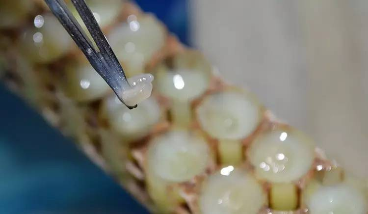 蜂蜜药性 哪家蜂蜜是真的 健身可以喝蜂蜜水吗 蜂蜜冲水后很浑 烤面包什么时候刷蜂蜜