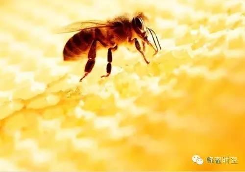娃哈哈蜂蜜冰糖雪梨 成熟蜂蜜结晶后 转化糖浆+蜂蜜 土蜂蜜哪里有卖 绿茶泡蜂蜜