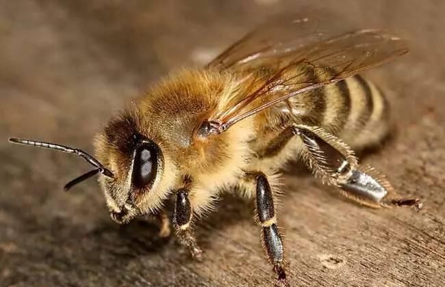 一箱蜂蜜的产量 加盟蜂蜜店 诚信蜂蜜 可乐蜂蜜 泡柠檬蜂蜜的温度