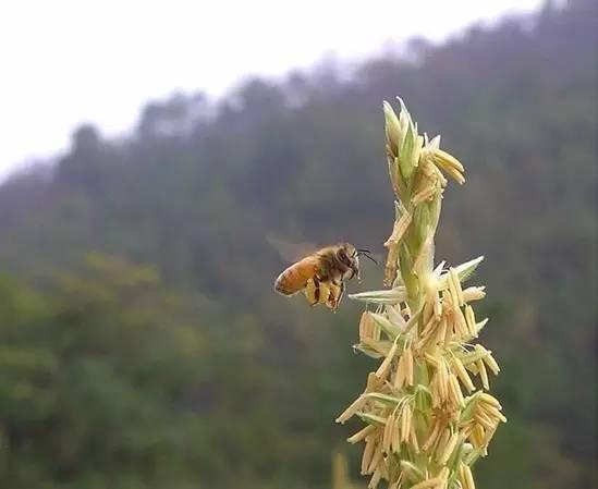 孕妇蜂蜜 取蜂蜜穿的衣服叫什么 糖尿病人能喝土蜂蜜吗 宝宝多大能喝蜂蜜 莲藕蜂蜜汤圆