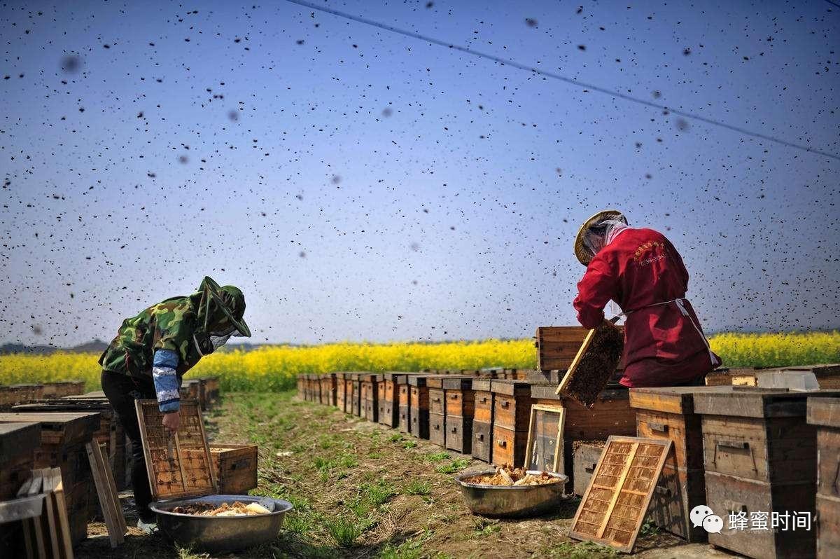 蕊悦牌北京同仁堂蜂蜜 土蜂蜜养殖 喝白酒喝蜂蜜 蜂蜜和什么一起吃 百香果蜂蜜茶做法