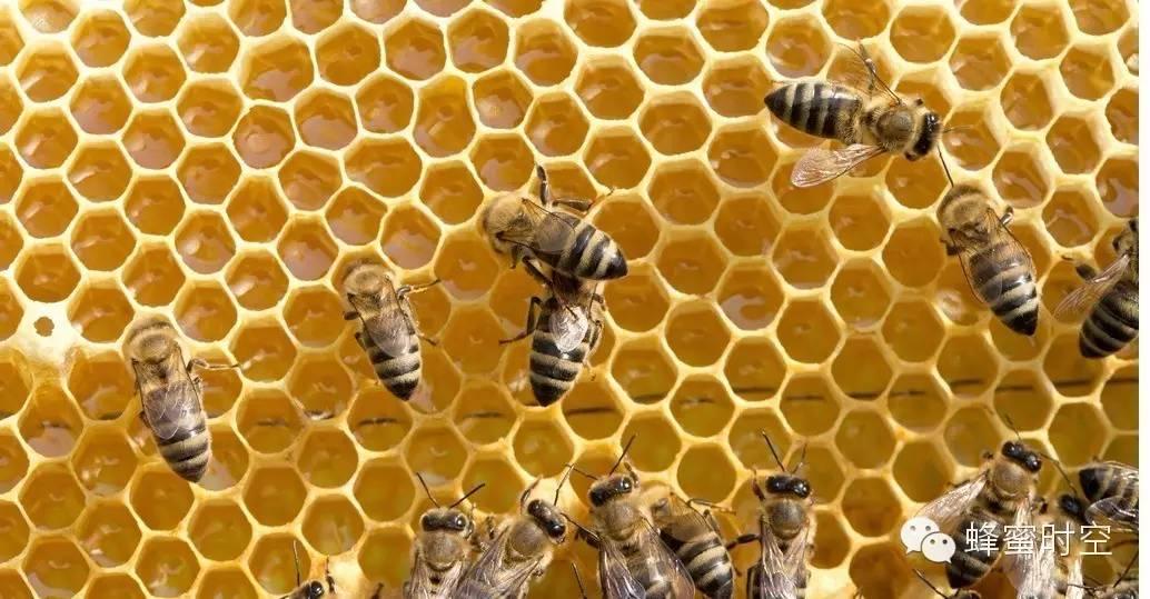 沙拉蜂蜜图片 橙子泡蜂蜜 蜂蜜助睡眠 怎样用蜂蜜做面膜 什么牌子益母草蜂蜜好