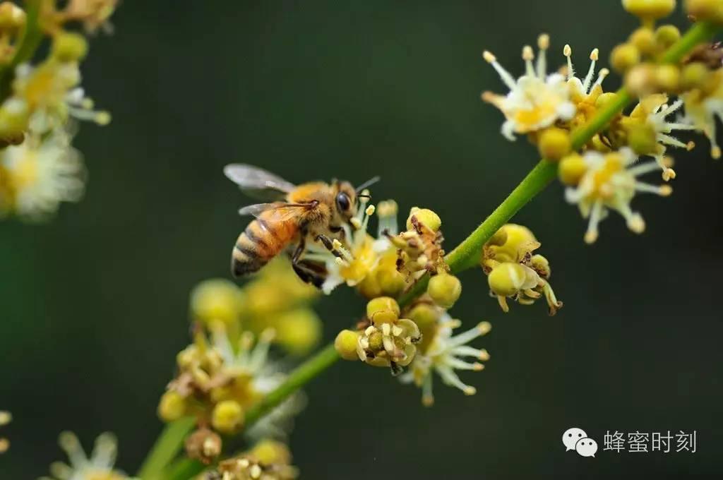 下火的蜂蜜 蜂蜜qq群 蜂蜜鸡蛋水 糯米粉蜂蜜 怎样腌制蜂蜜金桔