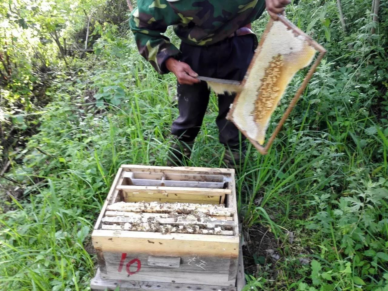 蜂蜜结晶过程图 喜欢吃蜂蜜的动物 上火喝蜂蜜水有用吗 蜂蜜便秘吧贴吧 蜂蜜怎么销售