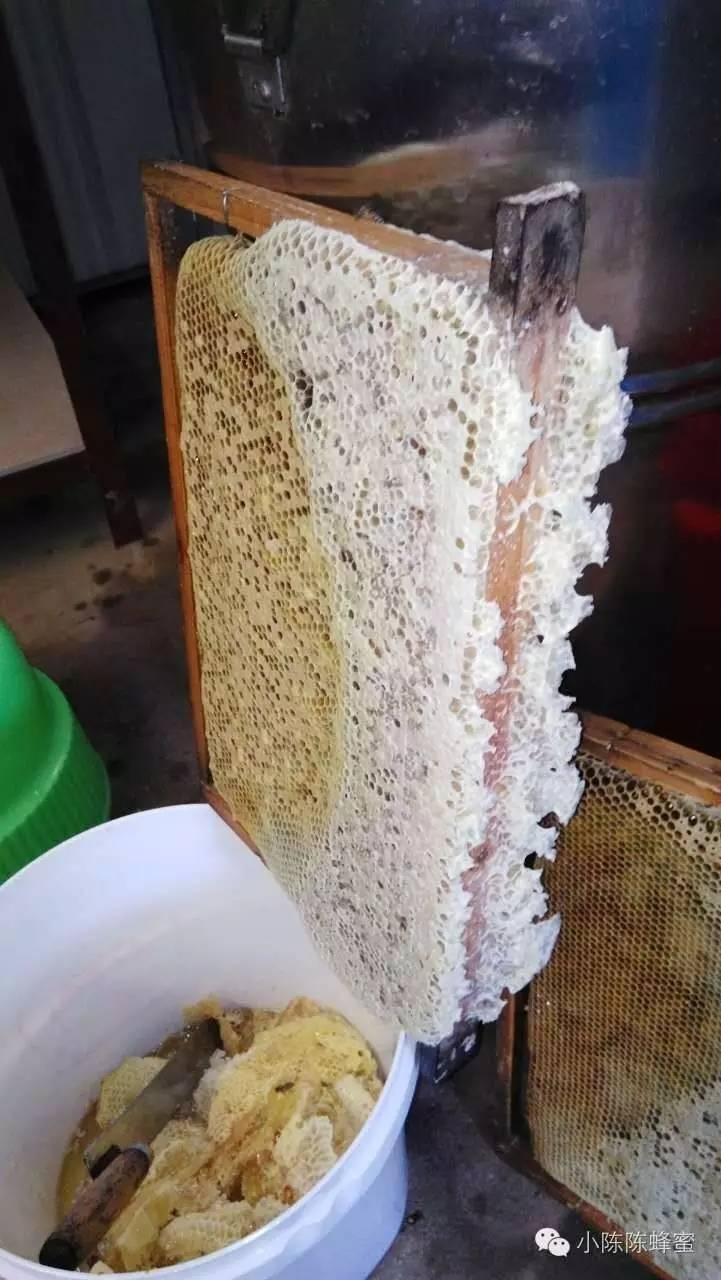 野外采蜂蜜 蜂蜜可以去细纹 蜂蜜王浆 宝利祥椴树蜂蜜 日本蜂蜜柠檬