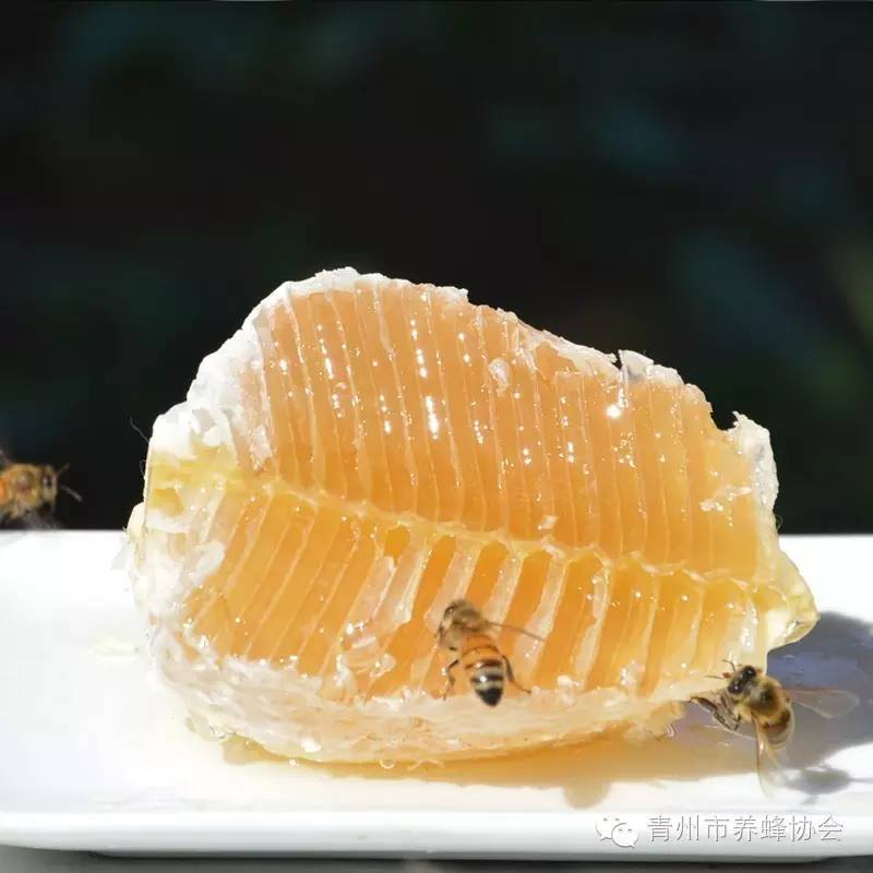 高血脂可以喝蜂蜜 青海的蜂蜜 香油蜂蜜减肥 手术后可以喝蜂蜜么 蜂蜜怎样喝