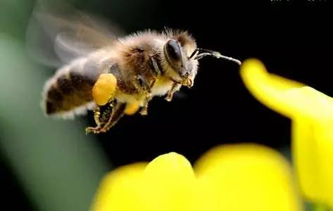 蜜蜂春繁在什么节气