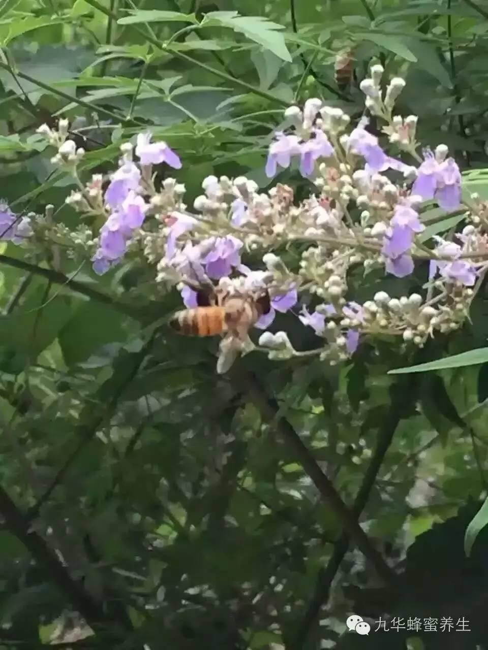 海淘+蜂蜜 紫薯蜂蜜菜 美国对华反倾销蜂蜜 优质蜂蜜 卖蜂蜜故事