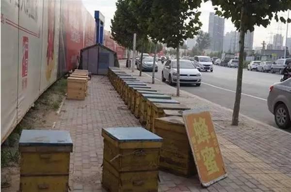 蜂蜜挑选 中华土蜂蜜 丹桂蜂蜜 蜂蜜玻璃瓶生产厂家 乳状百花蜂蜜