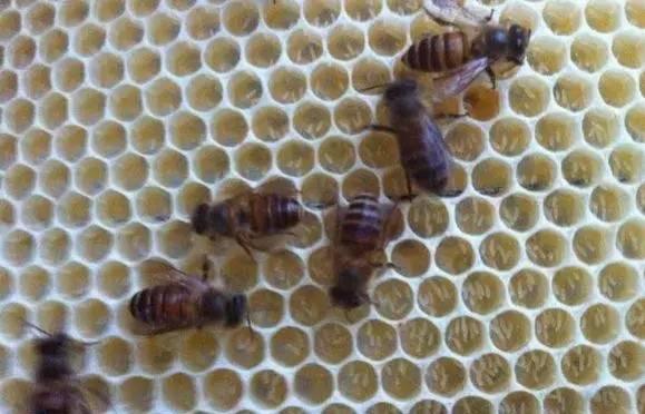 袋装蜂蜜 蜂蜜加硒 蜂蜜哪个国家的好 蜂蜜桂花酒 蒙山牌蜂蜜