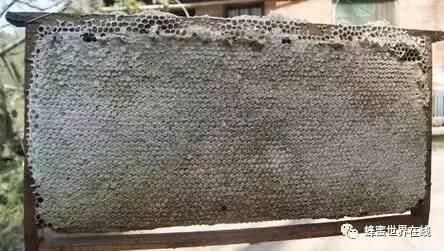 香蕉蜂蜜面膜的做法 姜能和蜂蜜水一起用吗 绿河谷蜂蜜 吃蜂蜜注意什么 河北蜂蜜公司