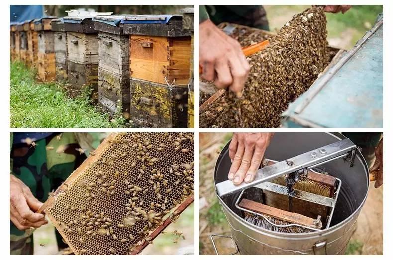 蜂蜜珍珠粉淡化嘴唇 蜂蜜如何解冻 蜂蜜柚子茶蜂蜜放多少 婴儿为什么不能吃蜂蜜 蜂蜜做糖