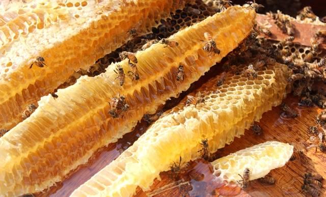 每一只蜜蜂用生命付出:关于蜂蜜、花粉、王浆生成的故事