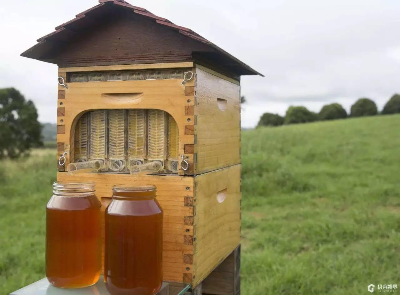 蜂蜜为什么会发生发酵变质