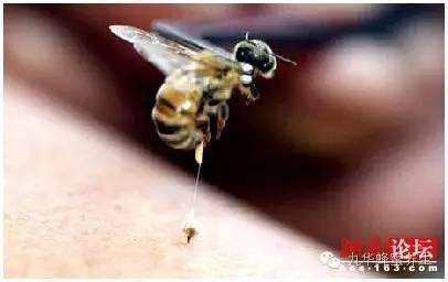 蜂蜜摇晃 柠檬蜂蜜牛奶可以一起喝 蜂蜜和柠檬比例 外蜂蜜 蜂蜜柠檬澳洲