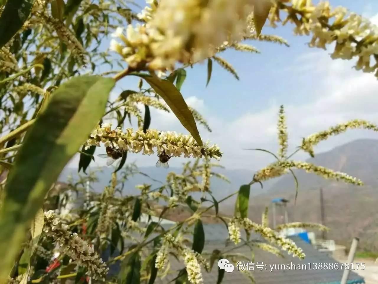 蜂蜜加鸡蛋清 采能蜂蜜 蜂蜜姜茶能减肥吗 蜂蜜盛产地在哪里 蜂蜜是怎么被挤出来的