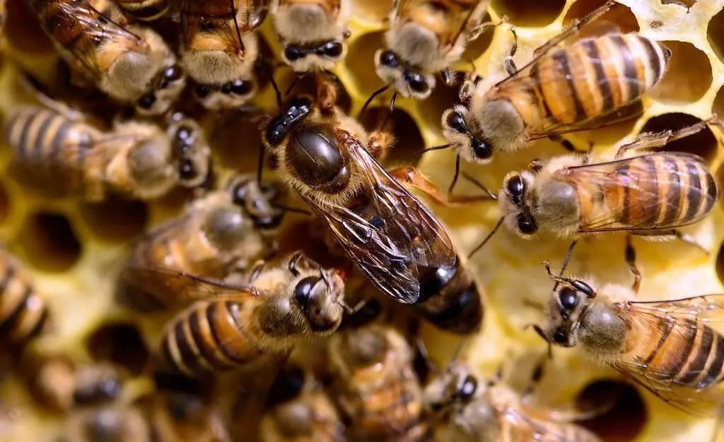 药可以和蜂蜜一起吃吗 黄瓜沾蜂蜜 用蜂蜜怎样洗脸美容 成人奶粉加蜂蜜 红酒蜂蜜面膜