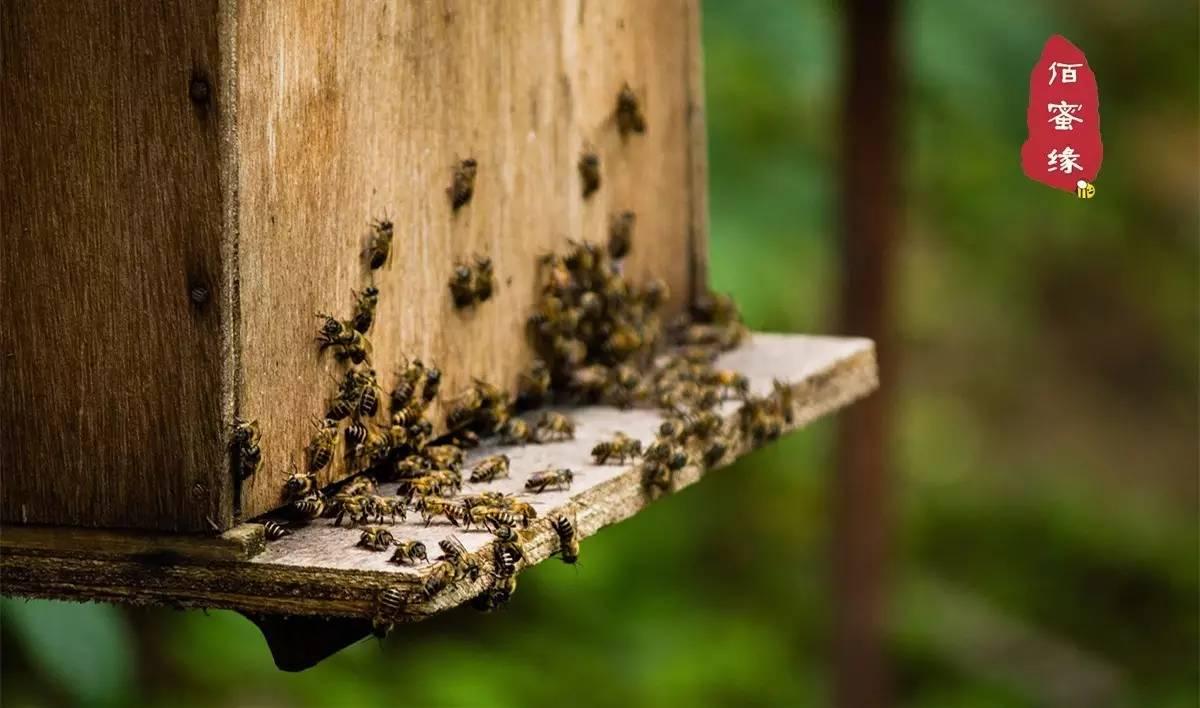 姜水冲蜂蜜喝有什么功效 20克蜂蜜 蜂蜜里面有虫 蜂王浆 薏米加蜂蜜的功效