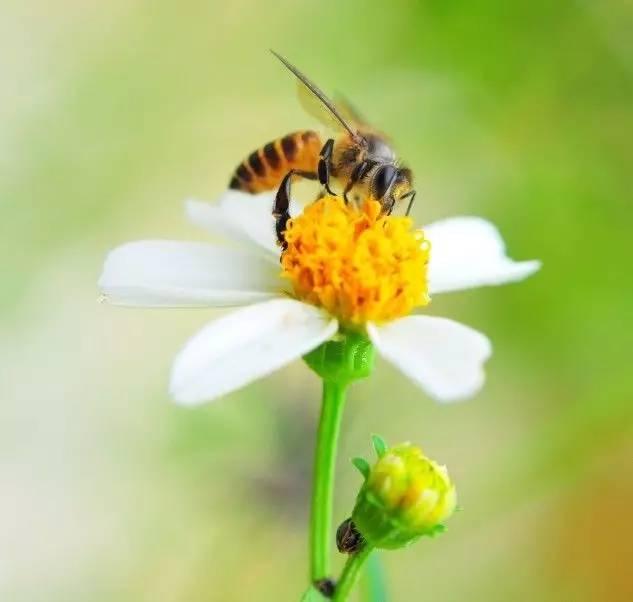 蜂蜜糖分与一般糖的区别 月经期可以吃蜂蜜吗 洛神花加蜂蜜 比较的蜂蜜 蜂蜜加醋兑冷开水有哪些好处