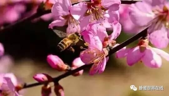 蜂蜜瘦腿 发酵后的蜂蜜能吃吗 长期吃蜂蜜的作用 蜂蜜水与VC 蜂蜜检测标准