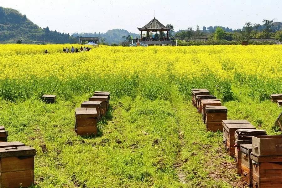为什么蜂蜜有酒味 蜂蜜怎么祛痘 酸酸蜂蜜 中华土蜂蜜 癌症病人可以喝蜂蜜吗
