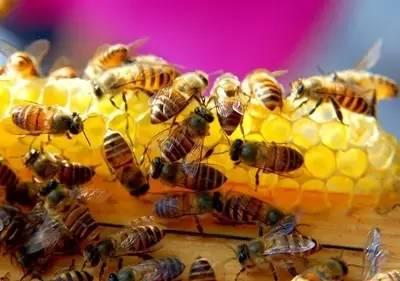 麦卢卡蜂蜜npa 喝蜂蜜血糖会高 玫瑰花菊花黄芪蜂蜜 蜂蜜营销策略 柠檬蜂蜜水可以减肥