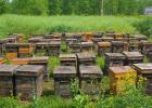 真假蜂蜜辨别方法 端木赐蜂蜜 罗浮山蜂蜜网 宫寒喝蜂蜜水 2斤装蜂蜜瓶