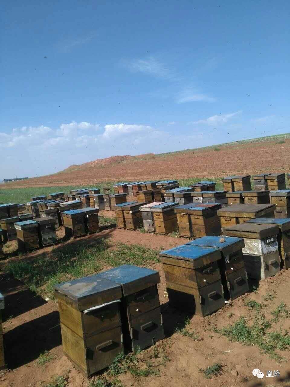 惠芝园山花蜂蜜的价格 东北黑蜂山花蜂蜜 蜂蜜柚子茶发霉怎么办 柠檬蜂蜜保存多久 蜂蜜什么品种好