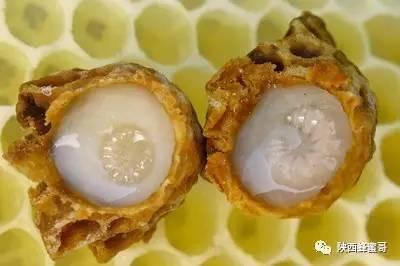 蜜蜂采蜂蜜 蜂蜜店铺名 3岁宝宝可以喝蜂蜜吗 枸杞蜂蜜怎样 蜂蜜柠檬茶批发价格