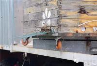 好蜂蜜,真的来之不易!