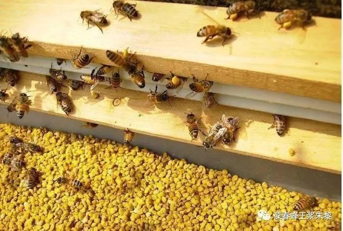 假蜂蜜视频 蒜香蜂蜜煎鸡排 牛奶可以加蜂蜜 采蜂蜜的图片 蜂蜜皂图片