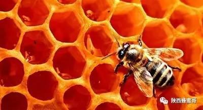 蜂蜜梅子茶 什么蜂蜜有酒精味 蜂蜜全部凝固 蜂蜜公司网站 morning蜂蜜