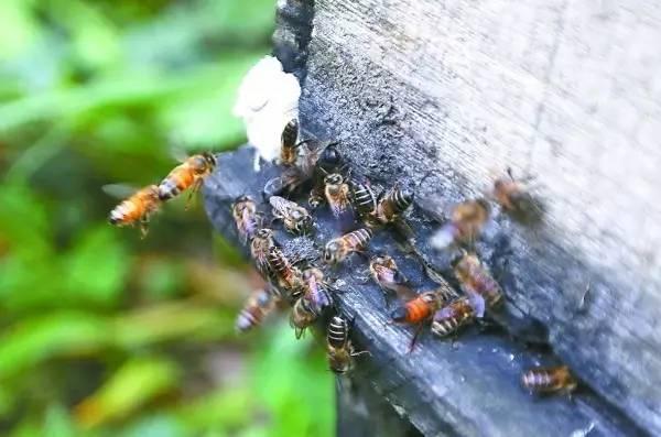 卖蜂蜜取什么名字 柠檬蜂蜜生姜可以 增强 蜂蜜生姜茶 sd敢达三国传袁术蜂蜜罐