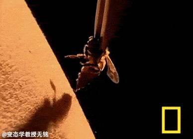 什么茶叶加蜂蜜好 孕妇便秘吃什么蜂蜜 颐寿园的蜂蜜怎么样 蜂蜜秘密 棕色蜂蜜玻璃瓶