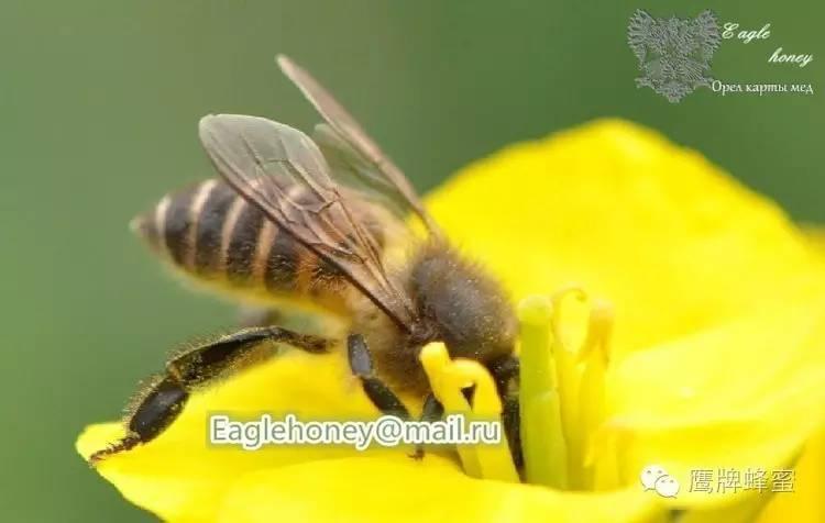 当蜂蜜开罐以后,我们需要怎么储存